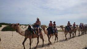 Kamelhusvagn på öken Royaltyfria Foton