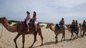 Kamelhusvagn på öken Arkivbild