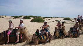 Kamelhusvagn på öken Royaltyfri Foto