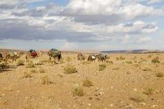 Kamelhusvagn på öknen Arkivbild