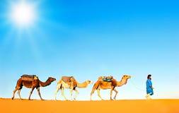 Kamelhusvagn på den Sahara öknen Arkivfoton