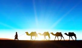 Kamelhusvagn på Sahara Royaltyfria Bilder