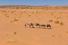 Kamelhusvagn som går till och med öknen Arkivbilder