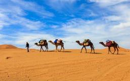 Kamelhusvagn som går till och med öknen Royaltyfri Fotografi