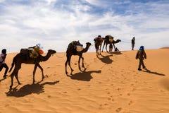Kamelhusvagn som går till och med den Sahara öknen Arkivbild