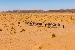 Kamelhusvagn som går till och med den Sahara öknen Royaltyfri Foto