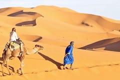 Kamelhusvagn som går till och med sanddyerna Royaltyfria Foton