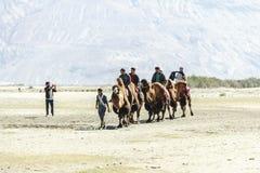 Kamelhusvagn som går till och med sanddyerna i den Nubra dalen Royaltyfri Bild