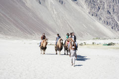 Kamelhusvagn som går till och med sanddyerna i den Nubra dalen Fotografering för Bildbyråer
