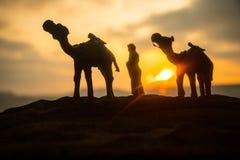 Kamelhusvagn som går till och med sanddyerna i den Sahara öknen, Marocco Kamel i ökenbegrepp royaltyfria bilder