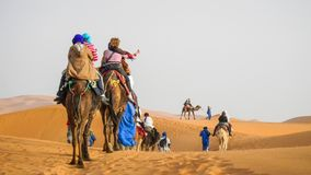 Kamelhusvagn som går till och med sanddyerna i Sahara Desert, Marocko arkivbild