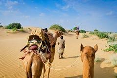 Kamelhusvagn som går till och med sanddyerna i öken Royaltyfri Foto