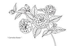 Kamelian blommar teckningen och skissar Royaltyfri Fotografi