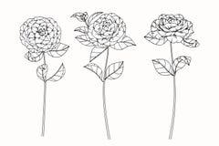 Kamelian blommar teckningen och skissar med linje-konst Arkivfoto