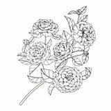 Kamelian blommar teckningen och skissar med linje-konst Royaltyfri Bild