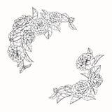 Kamelian blommar teckningen och skissar med linje-konst på vit backg Royaltyfria Foton