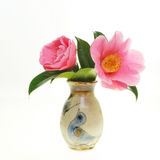 Kamelie im Vase stockfotografie