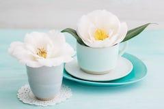 Kameliowi kwiaty Fotografia Royalty Free