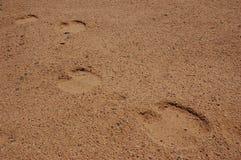 Kamelmarkierungen in der Wüste Lizenzfreie Stockfotos