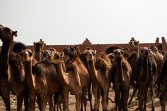 Kamelmarkt stockfotografie