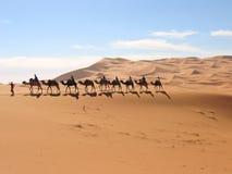 kamelmehare som trekking royaltyfria bilder