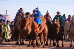kamelnaadamracers Arkivfoton