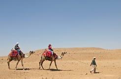 kamelritt Arkivfoto
