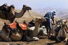Kamelritt i den Judean öknen arkivfoto