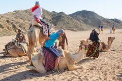 Kamelritt på öknen i Egypten Arkivfoto