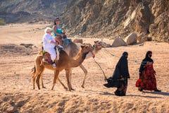 Kamelritt på öknen nära Hurghada Arkivbild