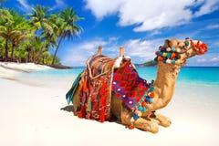 Kamelritt på stranden Royaltyfri Bild