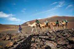 kamelritt som tar turister Arkivbilder