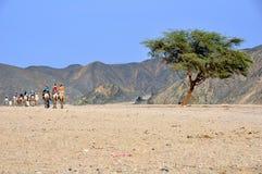 kamelsafari Royaltyfri Fotografi