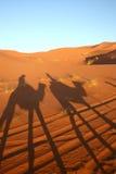 Kamelsafari: Wohnwagen in der Wüste stockbilder