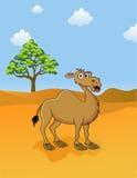 kamelsavanna Arkivfoto