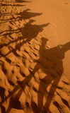 Kamelschatten in der Sahara-Wüste Stockbild