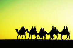 Kamelschattenbilder in den Dünen auf Sonnenuntergang Stockfoto