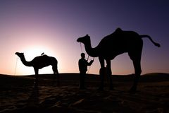 Kamelschattenbilder am Sonnenaufgang Stockfoto