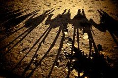 Kamelskuggor Arkivfoton