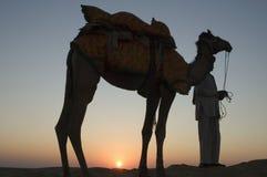 kamelsolnedgång Arkivbild