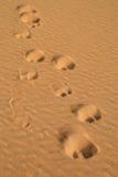 Kamelspuren in der Wüste Stockfotos