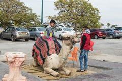 Kameltreiber mit einem Kamel in Erwartung einer Fahrt auf ein Kamel in Yeriho in Israel Stockfotografie