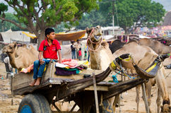 Kamelvagn på den Pushkar kamelmässan, Rajasthan, Indien Royaltyfri Fotografi