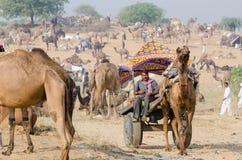 Kamelvagnsritt på den Pushkar kamelmässan, Rajasthan, Indien Royaltyfri Foto