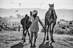 Kamelverkäufer von der Stadt von Pushkar, Pushkar Mela stockfotografie