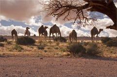 Kamelwüste Stockfotografie
