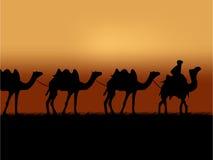 Kamelwohnwagen Stockfoto