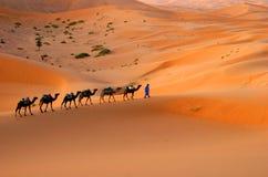 Kamelwohnwagen stockbild