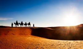 Kamelwohnwagen auf Sanddünen in der Wüste lizenzfreie stockbilder