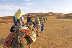 Kamelwohnwagen, der die Sanddünen im Sahara durchläuft Lizenzfreies Stockfoto